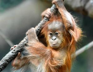 Asmara, photo courtesy of the Fort Wayne Children's Zoo