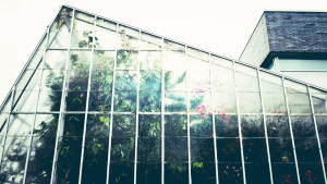 greenhouse-1246536_1920 copy
