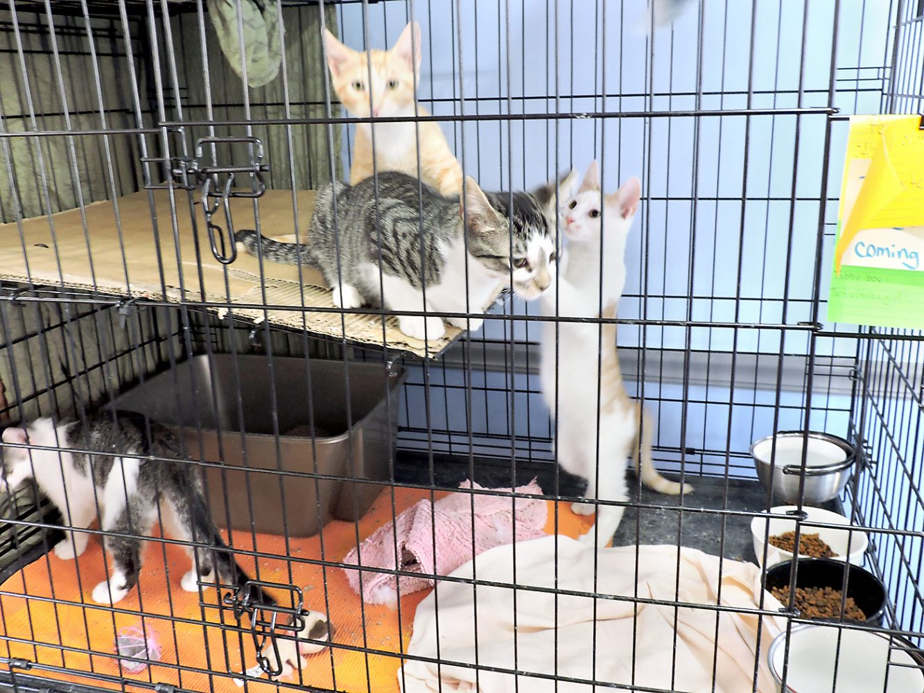 Hancock Humane Foundation Reveals Opening Of Cat Rescue News