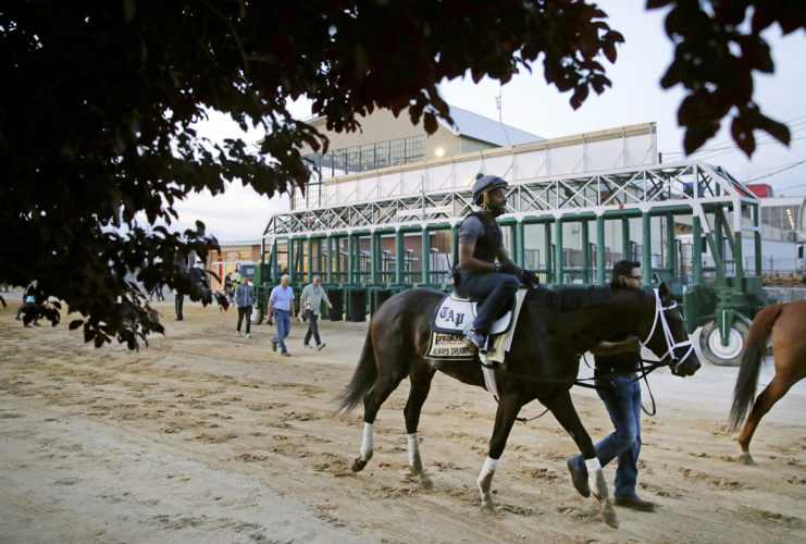 Kentucky Derby winner Always Dreaming, ridden by exercise rider Nick Bush, walks past the starting gates after a workout at Pimlico Race Course in Baltimore on Thursday. The Preakness Stakes horse race is scheduled to take place May 20. (AP Photo/Patrick Semansky)