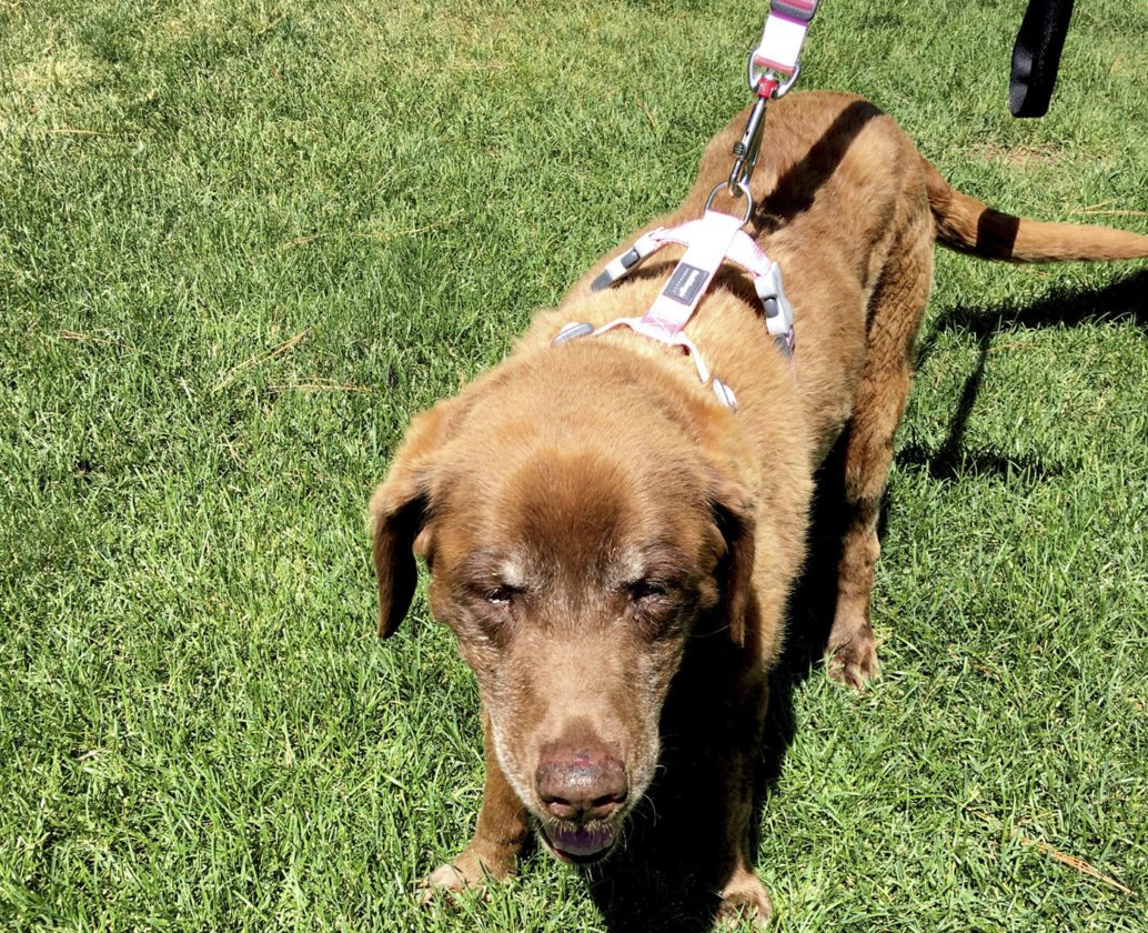 lost dog home after a winter alone in mountains news sports