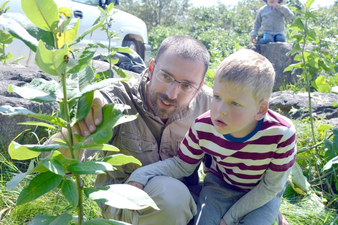 Ivan Brown, left, and his son, Jonnie, 6, of Ripon, Wis., check the undersides of milkweed leaves for monarch butterfly eggs Wednesday at Peninsula Point in Delta County.