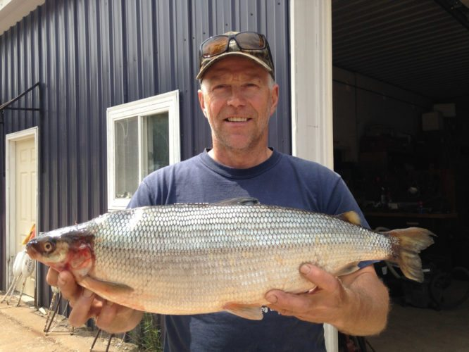 MICHAEL LEMANSKI OF Florence, Wis., holds the new Michigan-record cisco, formerly known as lake herring, he caught June 9 in Lake Ottawa in Iron County. The Department of Natural Resources recently verified the record catch.