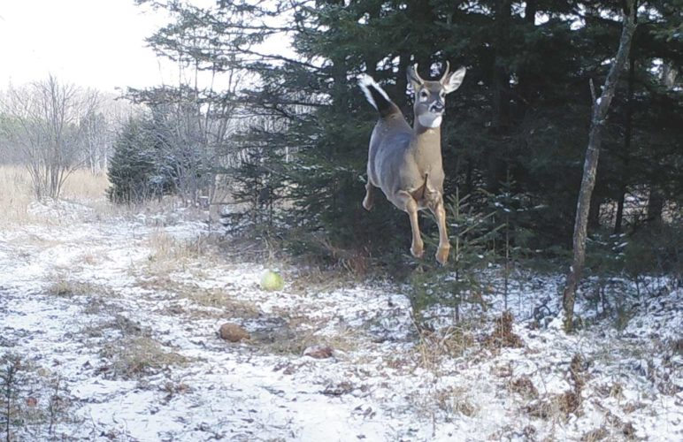 leaping-deer-photo