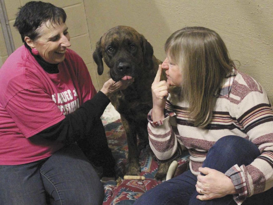 DIANE LUCZAK, DIRECTOR of the Almost Home Animal shelter in Quinnesec, scratches Emma Grace's neck as Phyllis Carlson of Quinnesec asks the English mastiff for kisses after the dog was captured this week after almost five months of roaming Dickinson County. (Theresa Proudfit/Daily News photo)