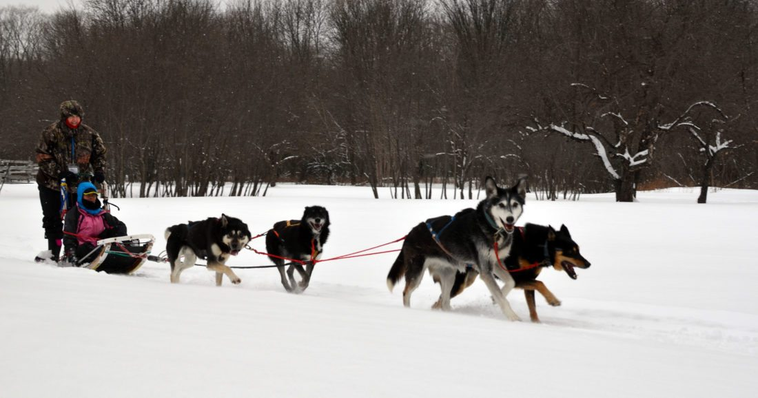 A dogsled team works near the corral at the Bay Cliff Health Camp in Marquette County.
