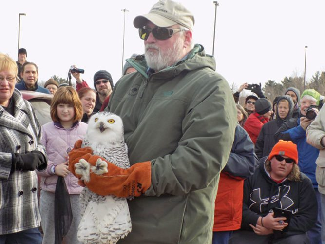 BOB JENSEN, CO-FOUNDER of the Chocolay Raptor Center, holds a snowy owl before its release near the Superior Dome. The owl was rehabilitated at the center after being found on a road near Bark River in December. (Christie Bleck/Journal photo)