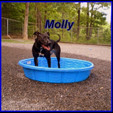 Molly is a very sweet 2-year-old dog.  She is hoping for someone who will love her and provide her with lots of exercise. Humane Society of Morgan County.