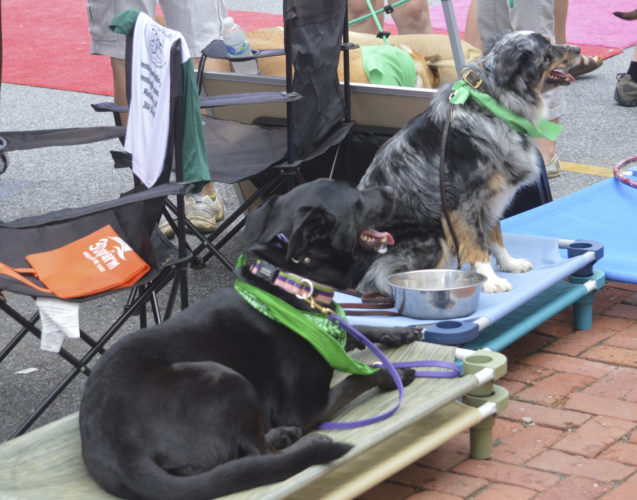 Training Dogs at the Bed and Biscuit Booth at Dog Fest in Shepherdstown are shown. (Journal photo by Adranisha Stephens)