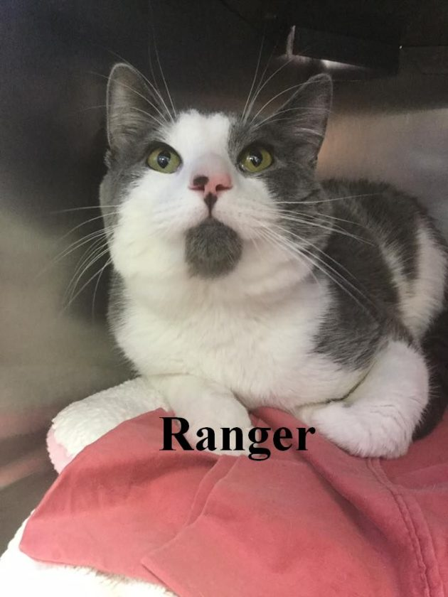 Ranger is a very friendly 1-year-old boy. He loves to roll over on his back for a tummy rub! He was originally a stray but now he needs your help in finding a forever home. His adoption fee is $65 and his neuter is included. He's available at the Berkeley County Humane Society, 554 Charles Town Road, Martinsburg, 304-267-8389.