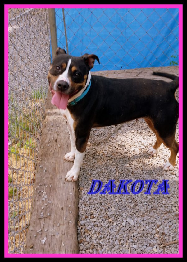 Dakota, a beagle/terrier mix, is a great dog. She is 3-years-old and spayed and up to date on her vaccines. She is friendly to everyone! Dakota can be seen at the Humane Society of Morgan County 304-258-5592.