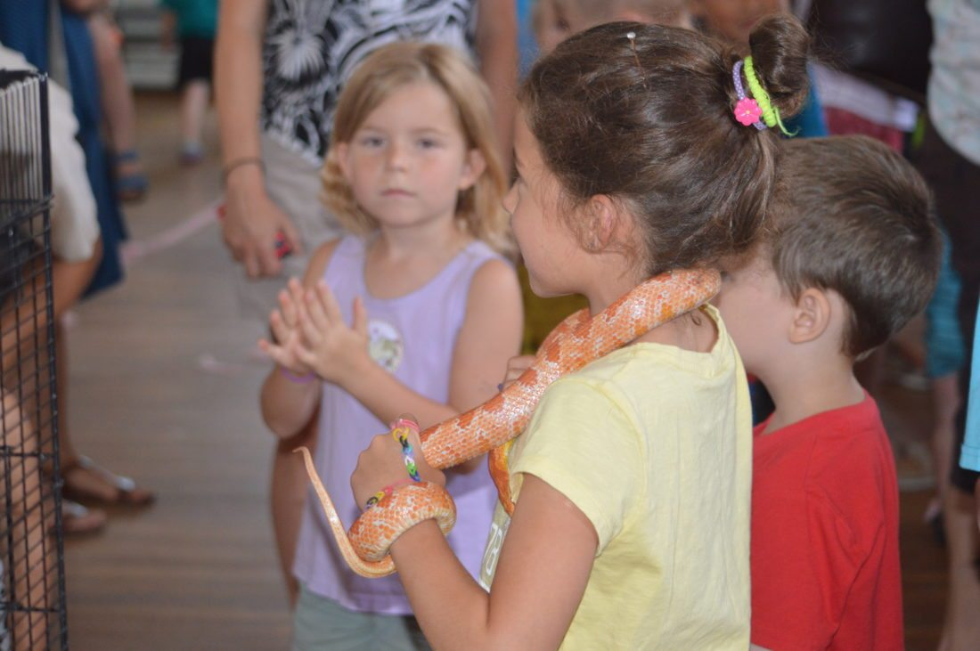One of the local Shepherdstown children participants holding the snake at the animal show. (Journal photo by Adranisha Stephens)