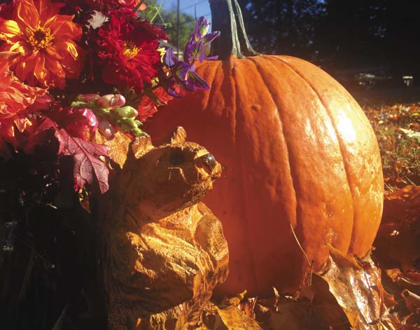 A chainsaw carved squirrel by Josh Kerr among some harvest treasures in Northville.  Kerr will be doing a chainsaw carving demonstration this Saturday at the Adirondack Country Store; located at 252 N. Main St. in Northville from 10 a.m. to 4 p.m. (photo submitted)