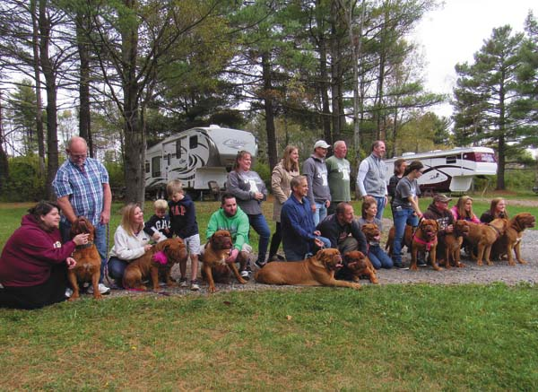 The 10 surviving mastiffs of the original 22 rescued from an alleged animal abuse case pose with their owners at a reunion at Pine Park in Broadalbin Saturday sponsored by the Brennan Memorial Humane Society in Gloversville. (The Leader-Herald/Eric Retzlaff)