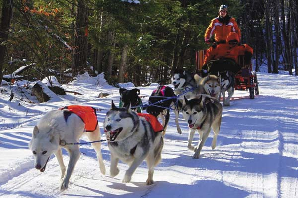 In this undated photo, Kate Walrath guides a team of mushing dogs. (Photo submitted)