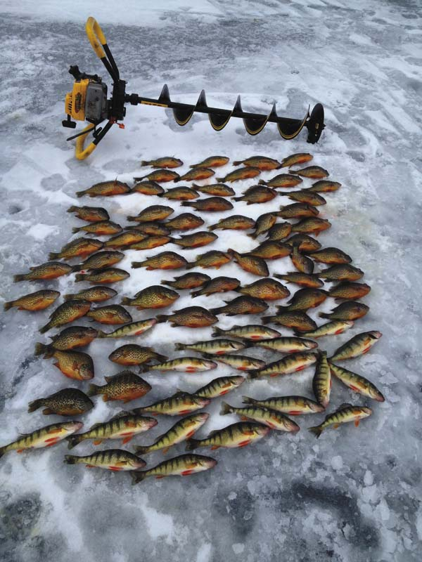 A nice haul of panfish by using electronics to locate schools of fish. (Photo courtesy of Capt. Stephen George)s