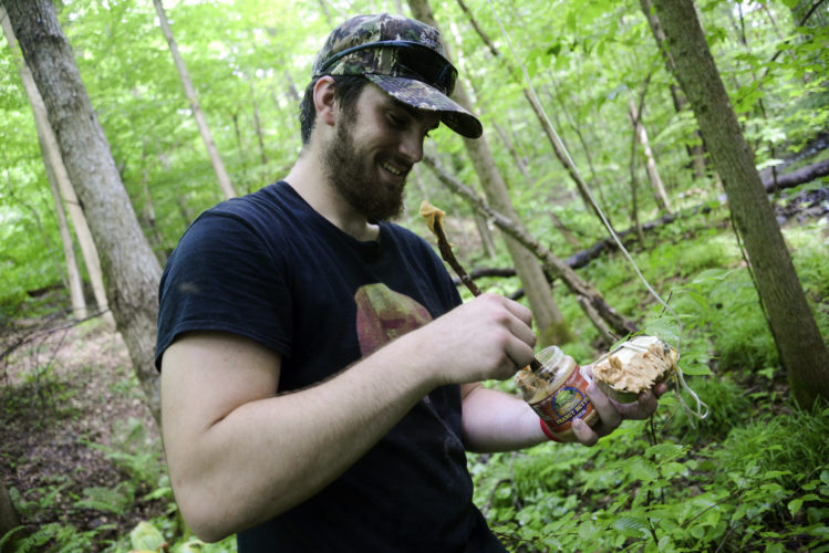 In a June 22, 2017 photo, Francisco Correia, member of the Searching for Bigfoot team, spreads peanut butter on sardines as bait near a tree-mounted camera in his search for Bigfoot in Crawford County, Pa. (Shannon Roae/Meadville Tribune via AP)