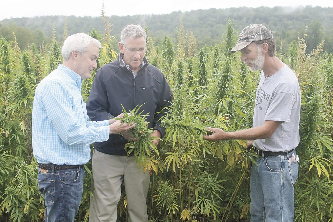 Sentinel photo by LAUREN KERSHNER JustBen Agriculture LLC partners Justin Frederico, left, and Ben Hall, right, show Pennsylvania Secretary of Agriculture Russell Redding some of their hemp plants. The partners grow about five acres of hemp plants for research purposes.