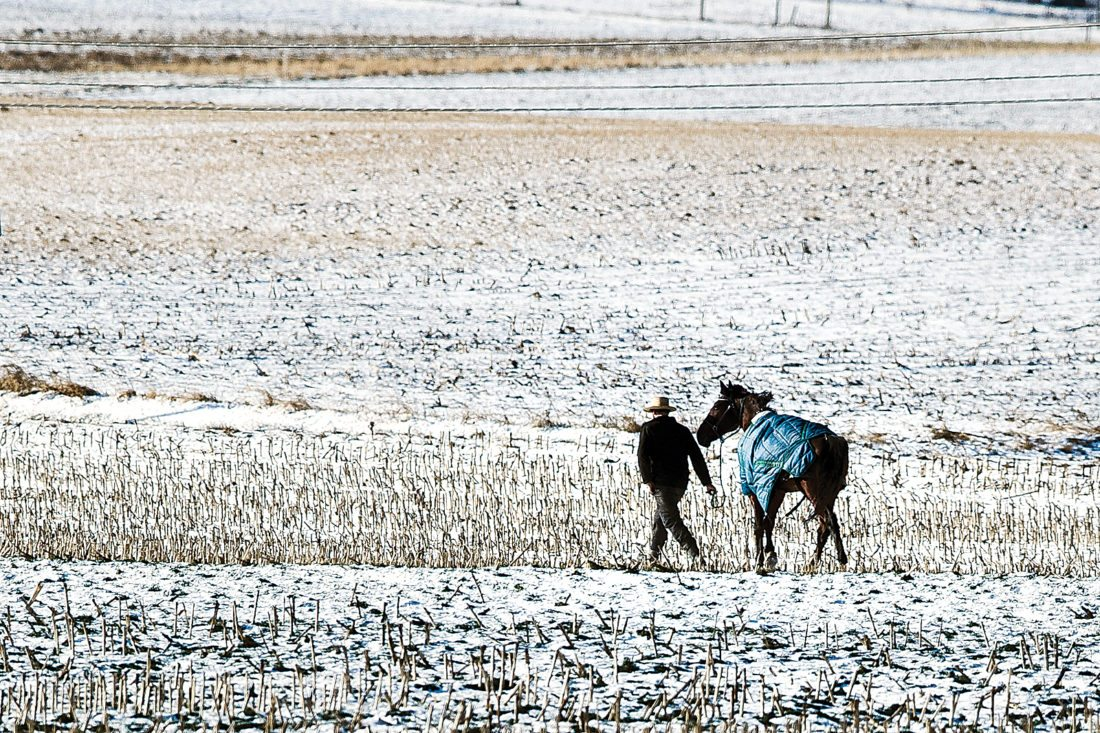 A farmer walks his horse across a baron field in freezing temperatures in Strasburg, Pa., Tuesday, Jan. 2, 2018. (AP Photo/Matt Rourke)