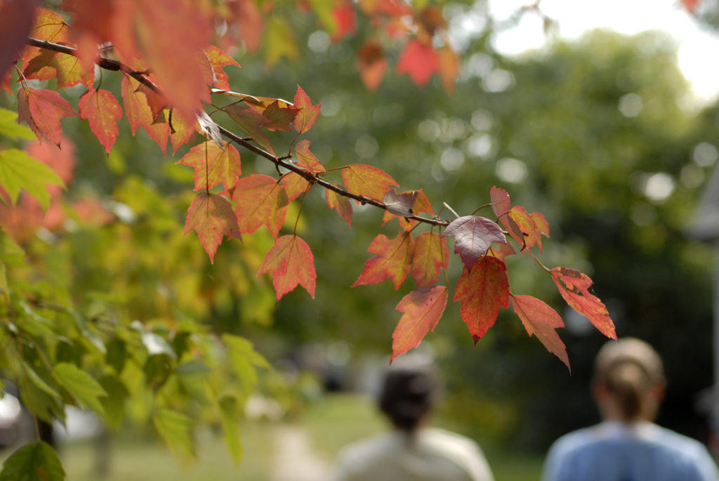 Conditions Ripe For Especially Colorful Fall News Sports Jobs