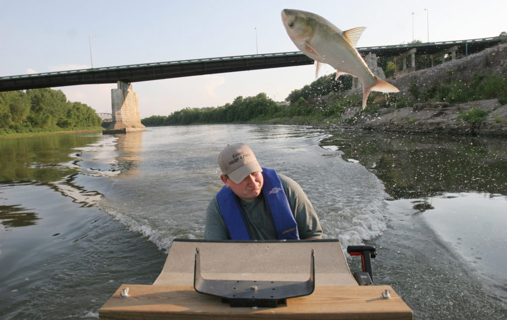 That would Asian carp dna well possible!