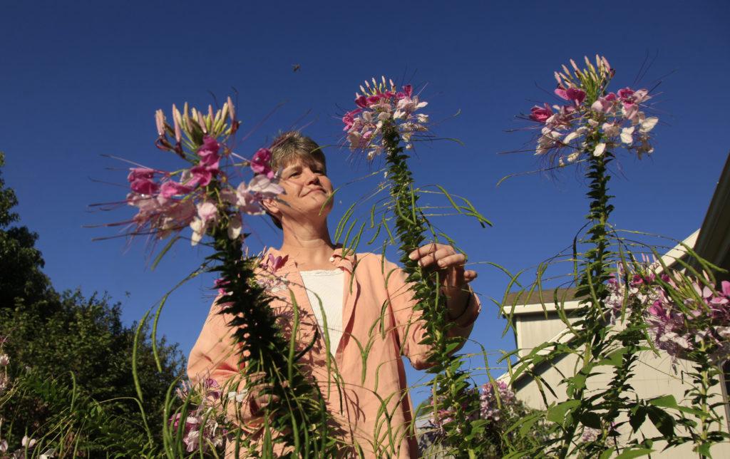 Late Season Color Perennial Flower Mix Puts Out Season Finale