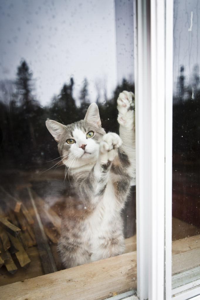 Fix It Chick Install A Pet Door In A Storm Window News Sports