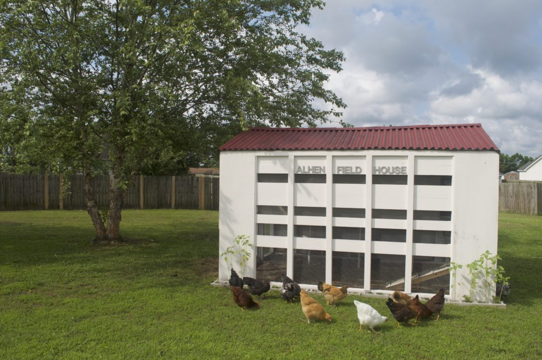Ku alumni construct mini allen fieldhouse for their chickens in ku alumni construct mini allen fieldhouse for their chickens in painstaking detail news sports jobs lawrence journal world news information malvernweather Images