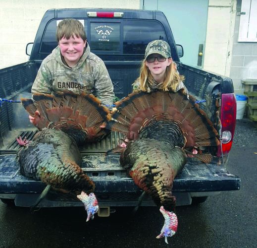 Bittner turkeys