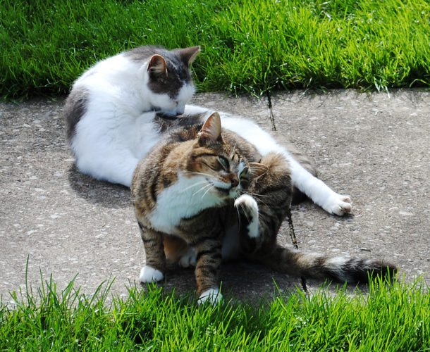 LAURA JAMESON/THE EXPRESS Feral cats in Mill Hall have a friend on Mann Avenue who feeds them and tries to have them spayed or neutered. A new borough ordinance regulating cats and their behavior is causing the caretaker to find homes for these strays.