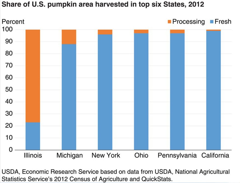 PHOTOS BY TOM BUTZLER Illinois is the top pumpkin-producing state but most of that production is for the processing market.
