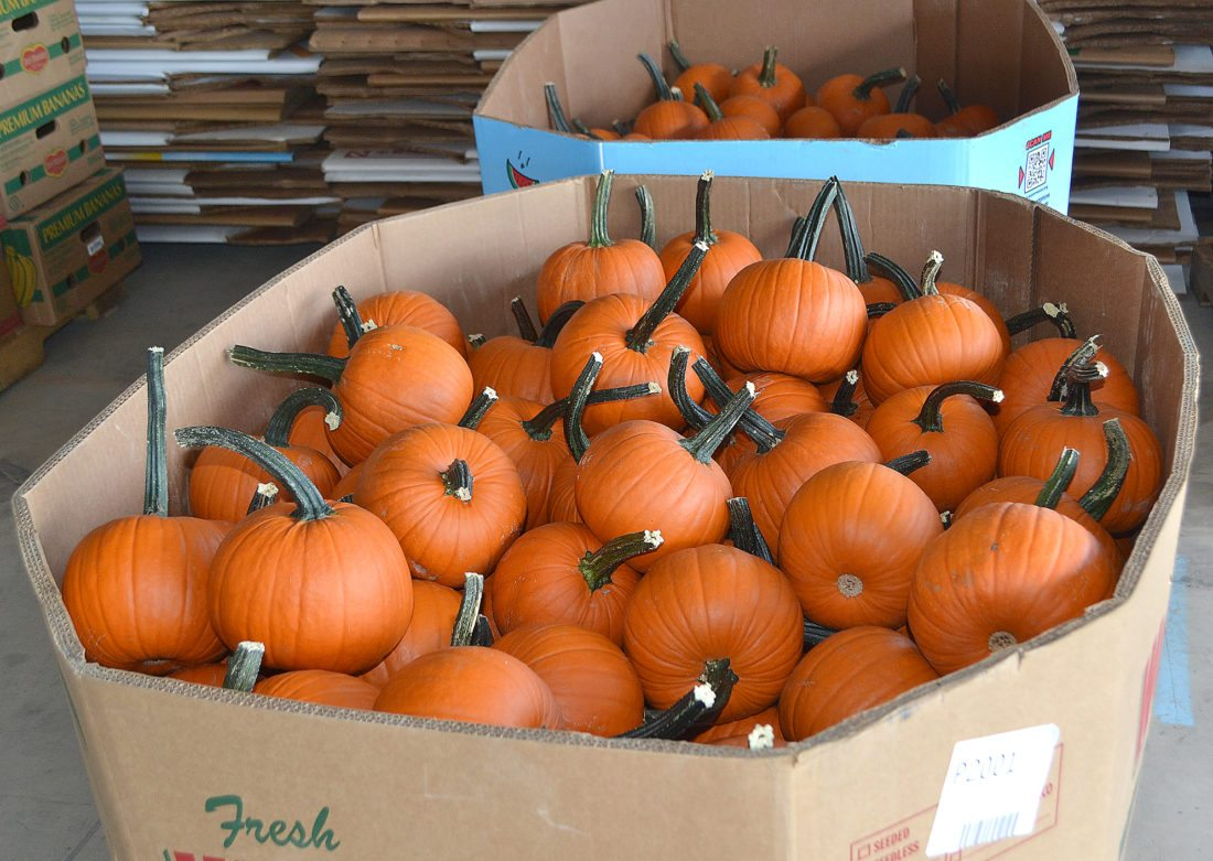Any pumpkins produced in Clinton and Centre counties end up at the Sugar Valley Produce Auction where buyers for grocery stores and roadside stands bid on them.