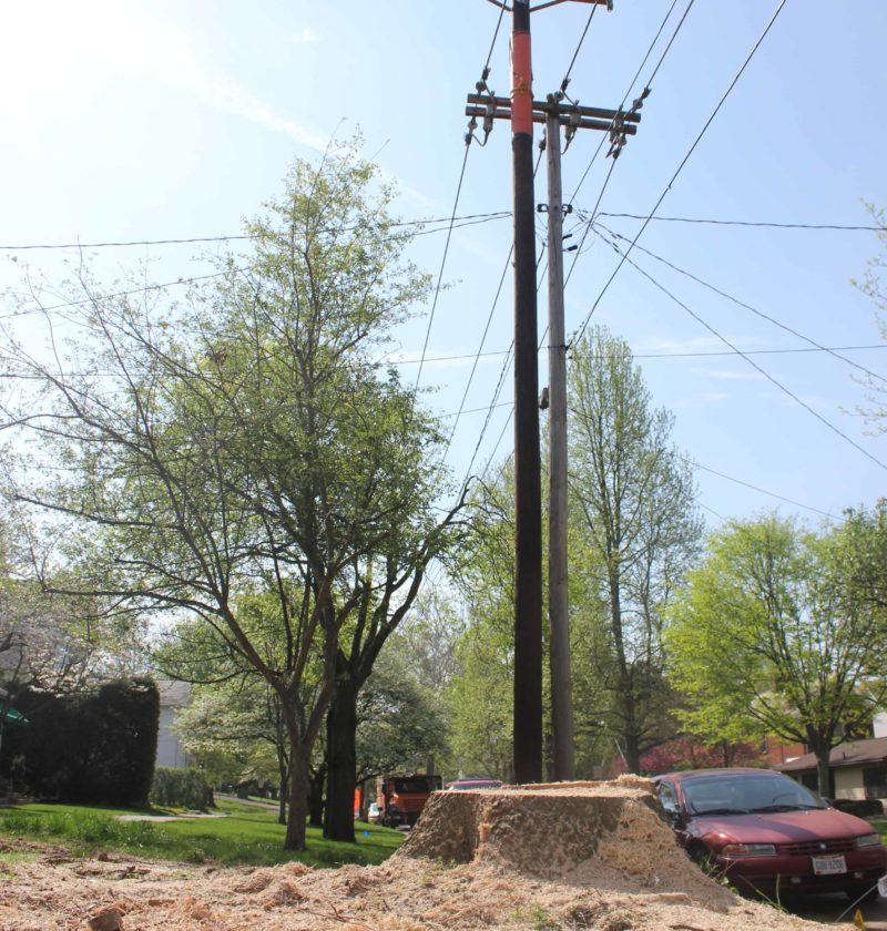 JANELLE PATTERSON   The Marietta Times A thick tree stump sits in the wake of Asplundh tree removal Thursday after AEP Ohio put in new power lines and poles along Eighth Street in Marietta.