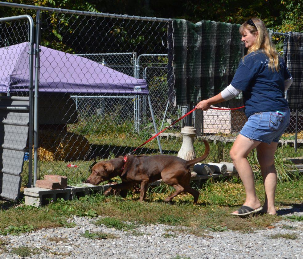 Animal sanctuary continues its mission News Sports Jobs