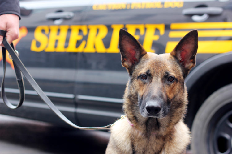 Rita, a 3-year-old German shepherd, is the newest addition to the Washington County Sheriff's Office as a dual purpose tracking and narcotics dog.  JANELLE PATTERSON   The Marietta Times