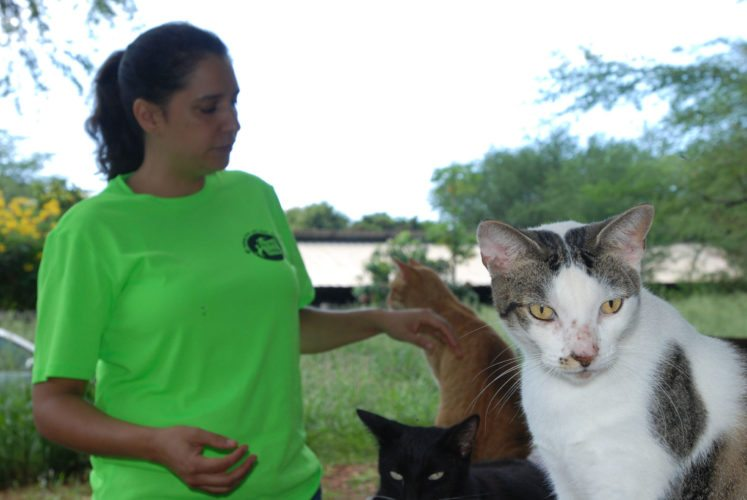 Chris Allejo, the director of operations for the spaying and neutering program run by the animal welfare group Poi Dogs and Popoki, pets cats at feral cat colony near Honolulu.  AP photo
