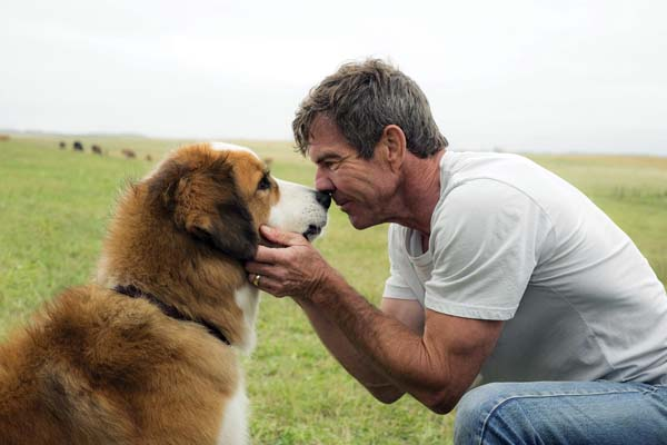 """Dennis Quaid with a dog (voiced by Josh Gad) star in """"A Dog's Purpose."""" Paramount Pictures photo via AP"""