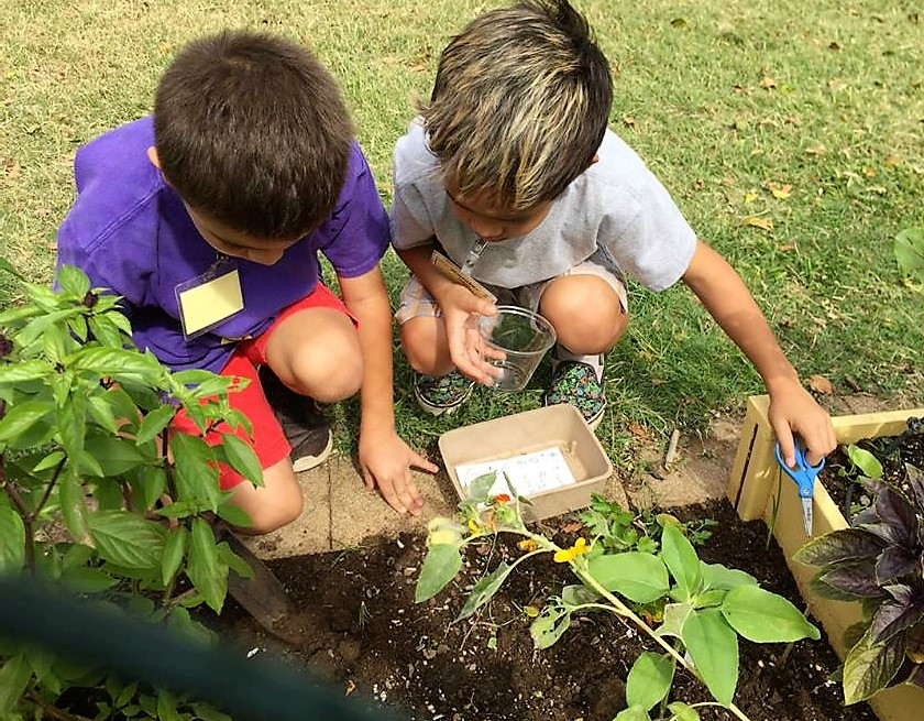 Kids look for weeds in the Kahului Elementary School garden. • Grow Some Good photo
