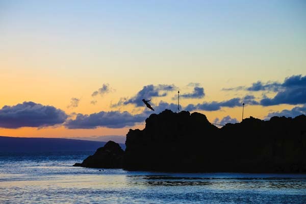 "A cliff diver leaps at sunset off of  Pu'u Keka'a, aka ""Black Rock,"" at Ka'anapali Beach."