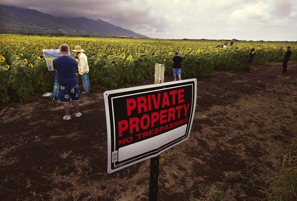 """No Trespassing"" signs don't stop people from going into Pacific Biodiesel Technologies' sunflower field to pose for pictures Thursday afternoon. People have reportedly stolen sunflowers and carved happy faces into flower blooms. The Maui News  MATTHEW THAYER photo"