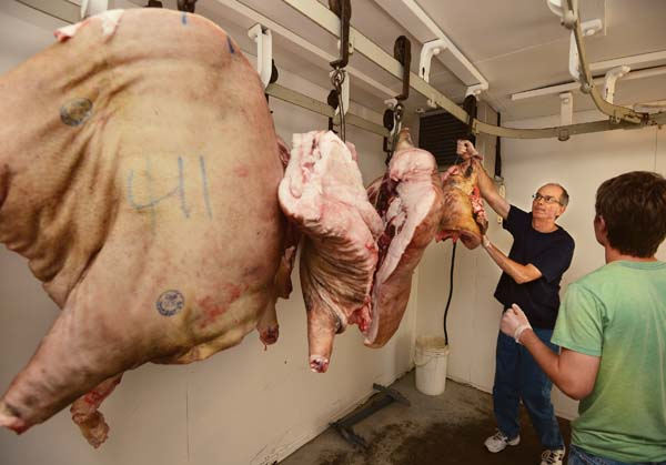 Mike Mack and Fletcher Prouty hang sections of pork in the walk-in cooler at Holy Ghost Mission on Friday. A total of 4,200 pounds of beef and 800 pounds of pork went into the cooler while crews get ready to make 7,000 laulau for next weekend's Holy Ghost Feast. -- The Maui News / MATTHEW THAYER photo