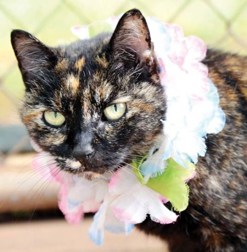 Gentle and affectionate lady Gemma No. 9 would love to be your new cuddle buddy. -- RUBY HERNANDEZ photo