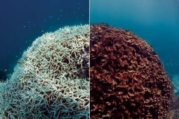These images of before and after coral bleaching were captured in the film Chasing Coral by The Ocean Agency — XL Catlin Seaview Survey — Richard Vevers and Christophe Bailhache. -- The Ocean Agency photo