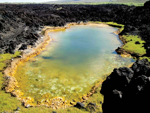 Anchialine pools are not tide pools — they have no direct connection to the ocean. Each pool is unique, both in the salinity of the brackish water and the species that live within them. -- JEFF BAGSHAW photo