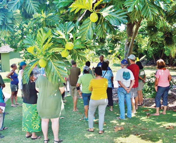 La 'Ulu:Breadfruit Day at Maui Nui Botanical Gardens; photo provided by MNBG.