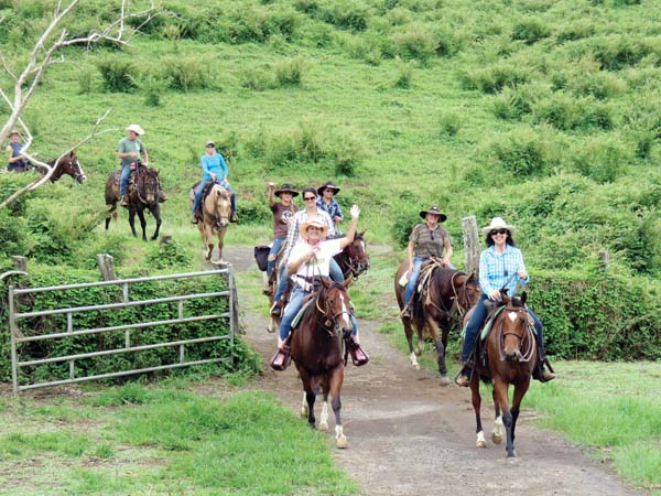 Horses and riders enjoy a spirited 10-mile ride from Thompson Road to the Fleming Arboretum within the Pu'u Mahoe cinder cone through private lands of Ulupalakua and OW Ranch.