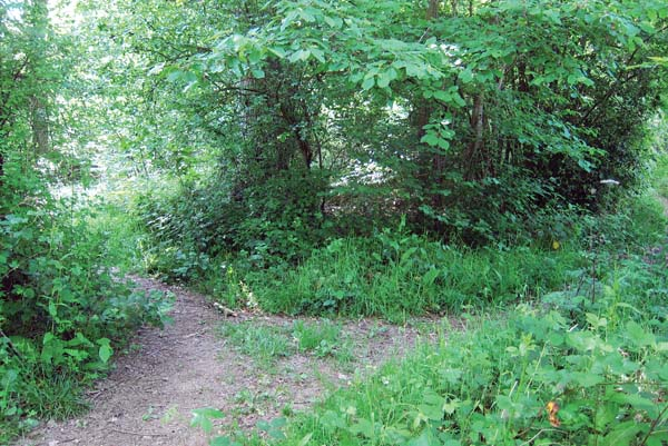 A path forks in a wooded area in Dymock, England. -- AP photo
