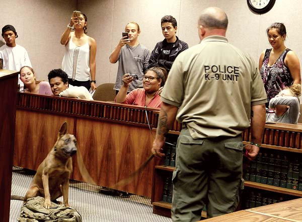 Maui Police Department vice K-9 officer Jamie Wright watches his dog, Senda, alert to a backpack containing marijuana Friday morning as King Kekaulike High School students snap photos during the demonstration in the courtroom of 2nd Circuit Chief Judge Joseph Cardoza. -- The Maui News / LILA FUJIMOTO photo