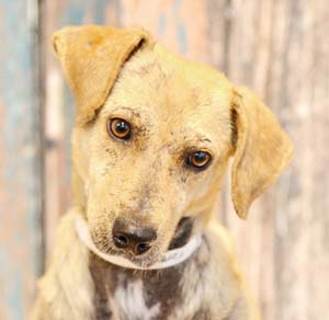 Tupelo is a total tender heart who could really use your TLC these days. -- RUBY HERNANDEZ photo