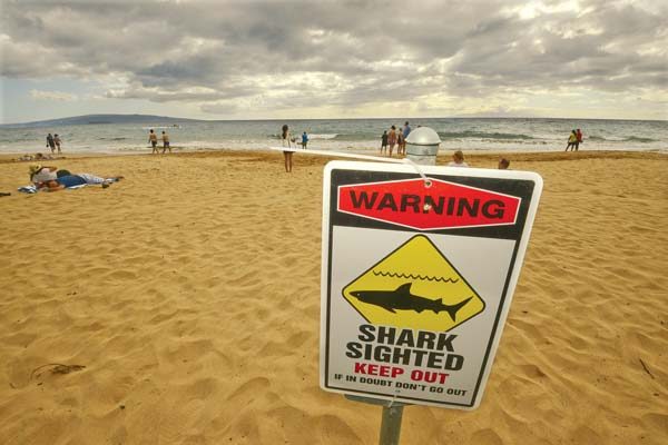 A warning sign to stay out of the water after a shark sighting on Wailea beach is shown from 2016. October has historically experienced the most shark  incidents statewide, a cautionary  reminder to beachgoers. -- The Maui News / MATTHEW THAYER photo
